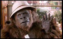 Voce Gorilla Crodino per Tom Tom
