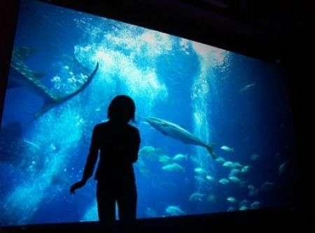 Fino al 31 Agosto: uffici Sony diventano un acquario!