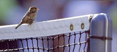 Somiglianze tennistiche