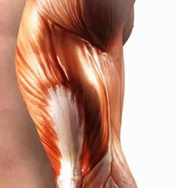 Muscoli artificiali che producono energia