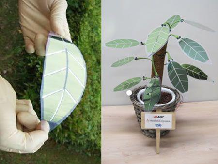 Piante con foglie a energia solare