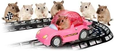 Critter Cruiser: i criceti da corsa