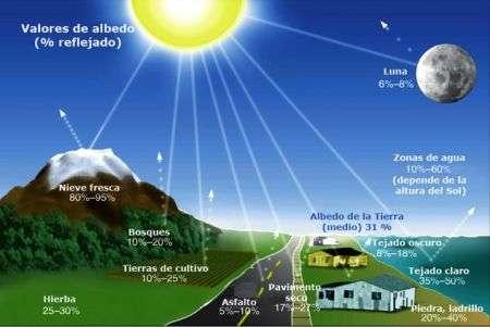 Riscaldamento globale: le piante riflettenti come cura