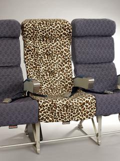 leopard lrg