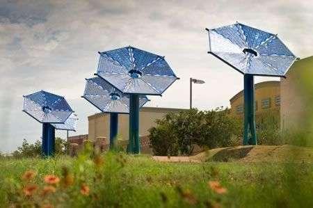 Sunflower: fiori solari per energia pulita
