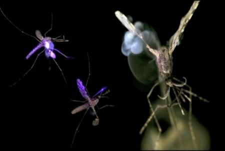 Laser ammazza-zanzare