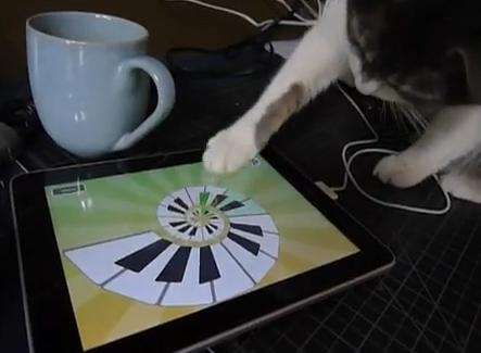 Apple iPad è a prova di gatto