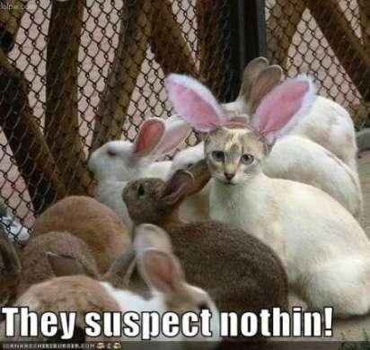Buona Pasqua 2010!