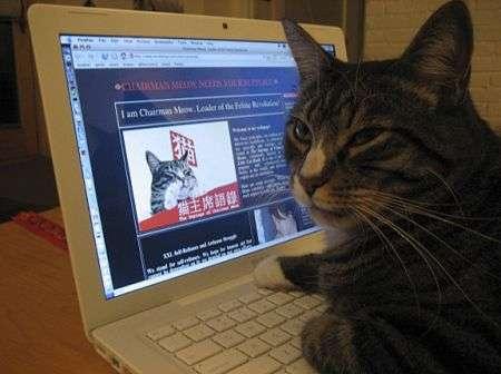 Computer del futuro si ispira al cervello di gatto