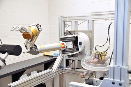 Braccio robotico controllato da cervello di scimmia