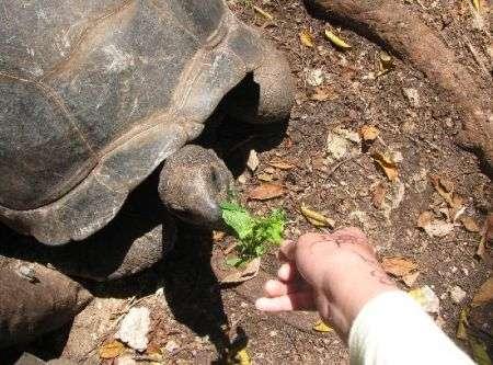 Ladro di tartarughe scovato sul web