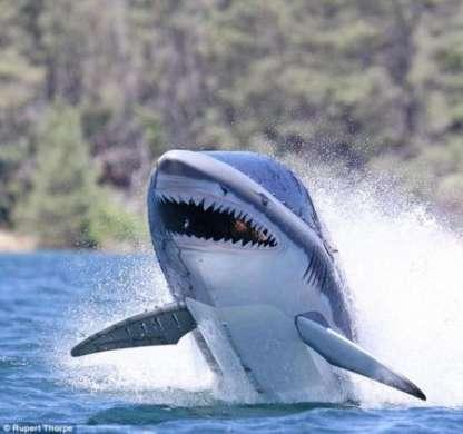 Seabreacher X: il sommergibile squalo che salta fuori dall'acqua!