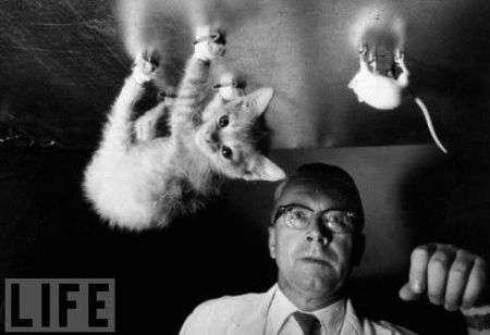 Gli esperimenti scientifici più bizzarri della storia