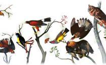 Google Doodle su John James Audubon, non su Chernobyl