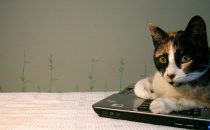 La garanzia HP non è valida per danni da pelo di gatto