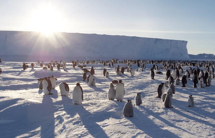 Foto dal satellite per il censimento preciso dei pinguini imperatore