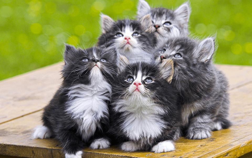 Google X e il supercomputer cervello digitale che ama i gatti