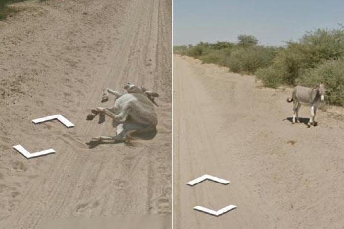 Google Car non ha investito un asino: le immagini rivelatrici [FOTO]