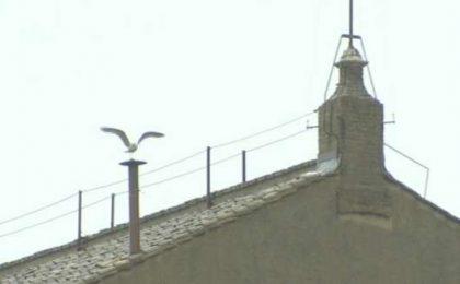 Gabbiano sul Camino della Sistina conquista Twitter [FOTO e VIDEO]
