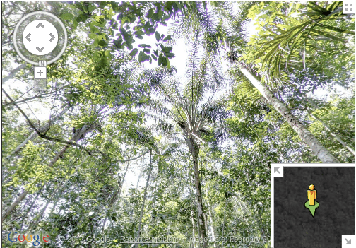 foresta amazzonica google street view