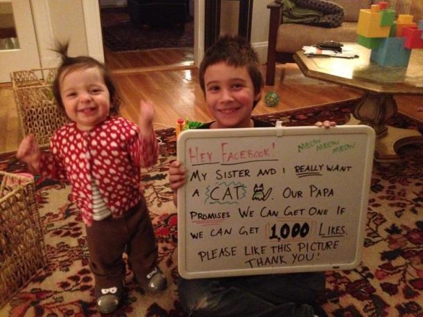 facebook bambini gatto