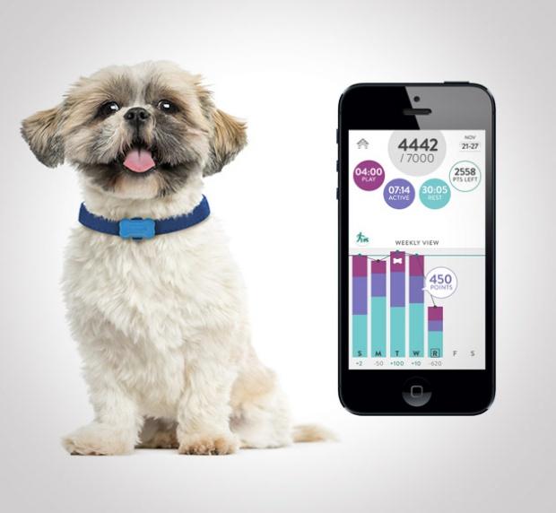 Collare per cani hitech: per mantenere in forma Fido