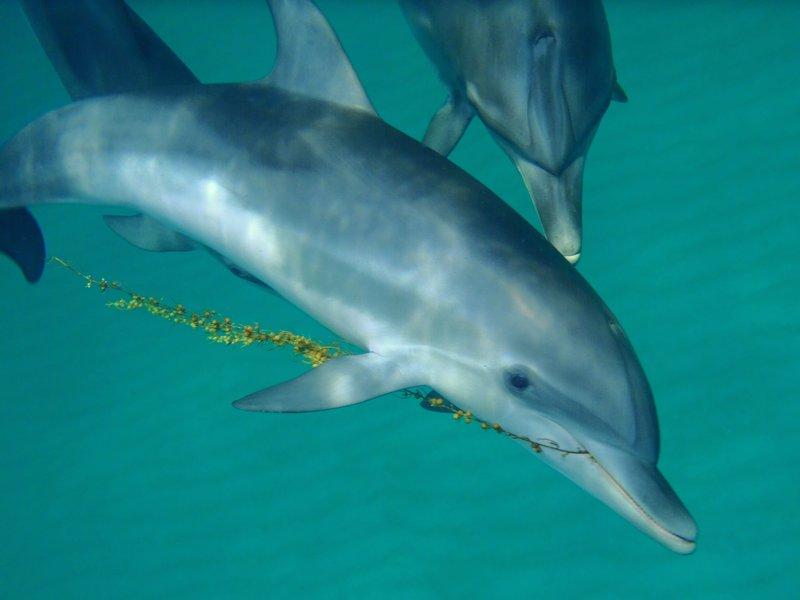 Traduttore delfinese-inglese per comunicare con i cetacei