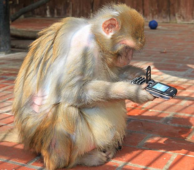 cellulare rubato scimmia