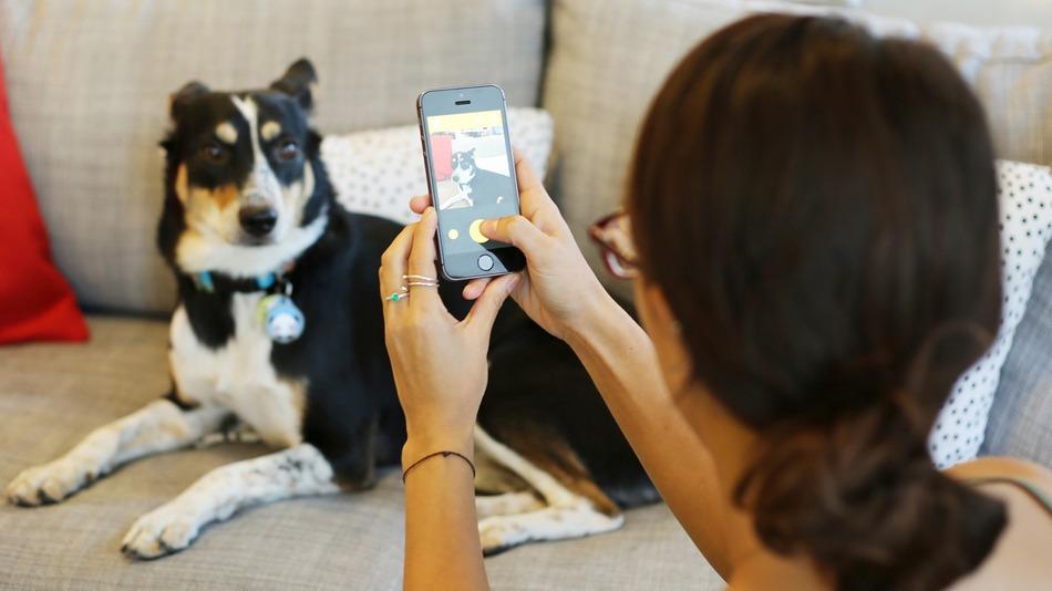 BarkCam: l'app perfetta per scattare foto ai cani