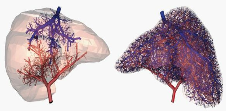 Stampanti 3D e medicina: creati i primi vasi sanguigni funzionanti