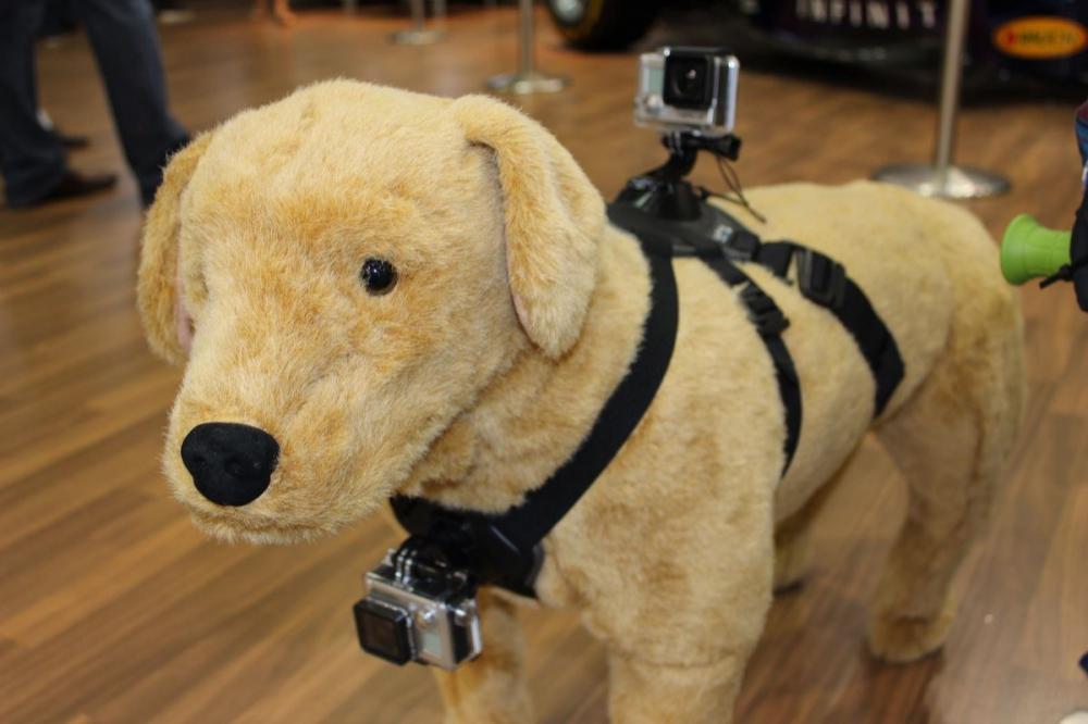 GoPro Fetch cane