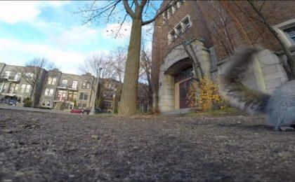 Scoiattolo ruba GoPro e si filma. Tutti i divertenti precedenti [VIDEO]