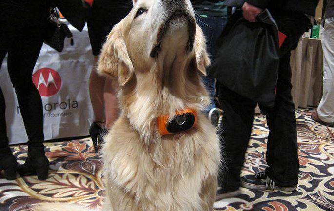 Motorola Scout 5000: il collare per animali sempre connesso