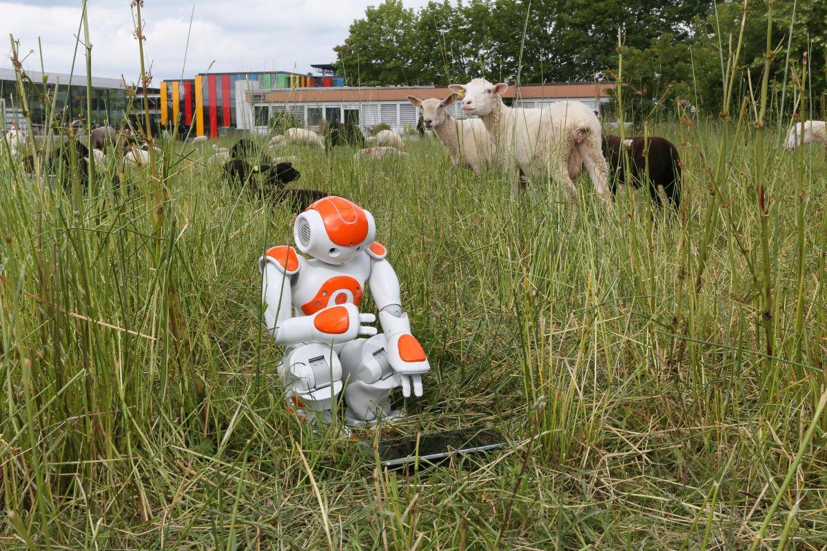 Esperimento educativo robot