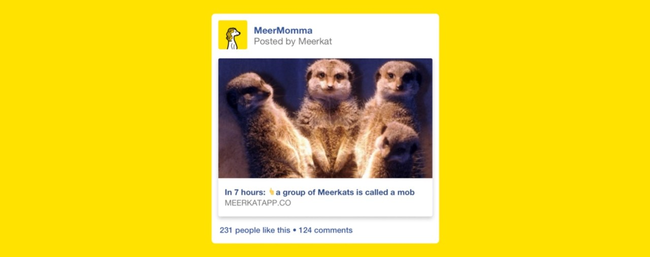 Meerkat per Facebook: la sfida frontale a Twitter Telescope