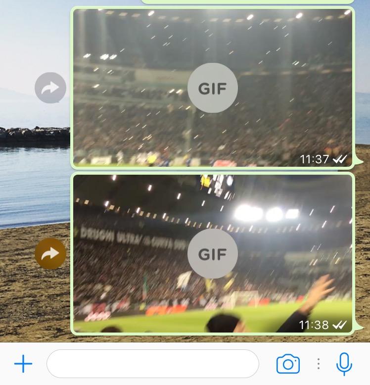 whatsapp gif salvate