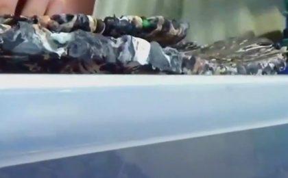 Lo skateboard di plastica riciclata