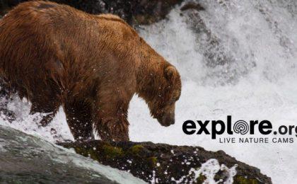 Google Earth e i live video per esplorare la natura
