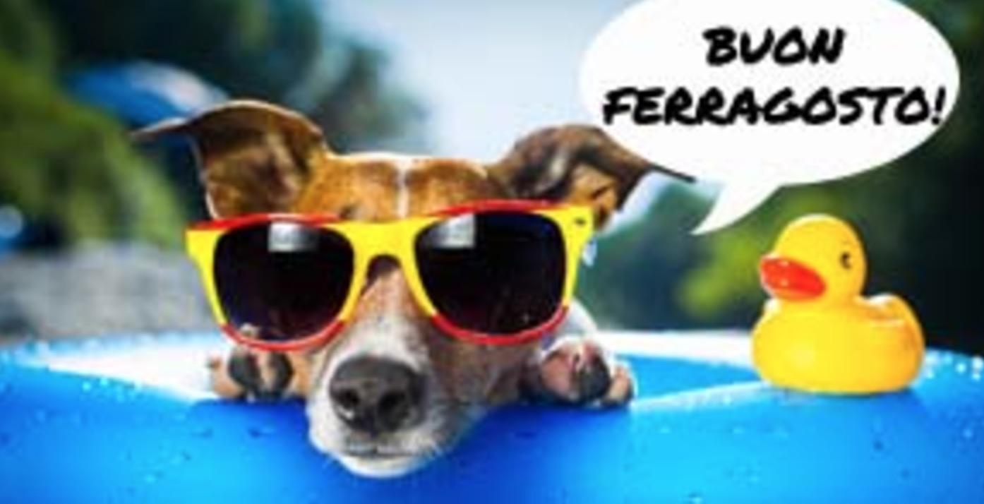 Buon Ferragosto cane