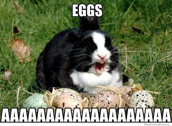 Buona Pasqua coniglio