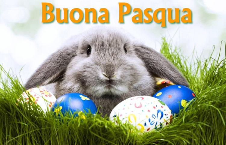 Buona Pasqua e coniglio con uova colorate